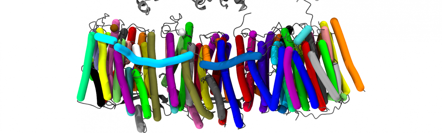 Respiratory Complex1 3RKO