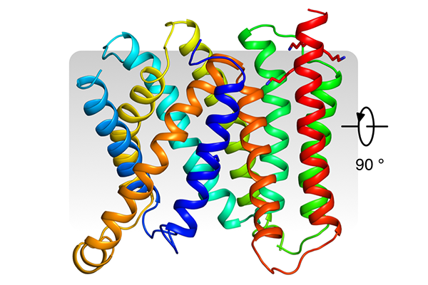 Crystal structure of Vrg4 viewed from the Golgi membrane
