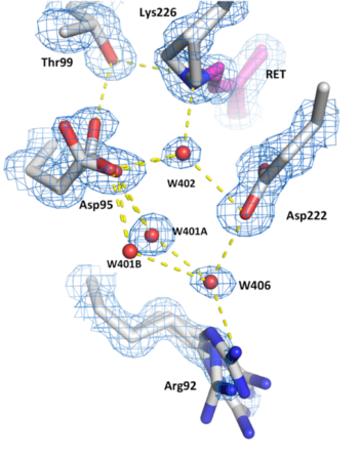 Hydrogen bond networks inside the desensitised state of AR3